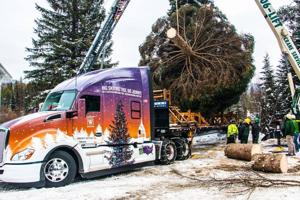 Capitol Christmas tree's Montana schedule