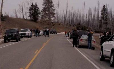 Yellowstone Park tourists