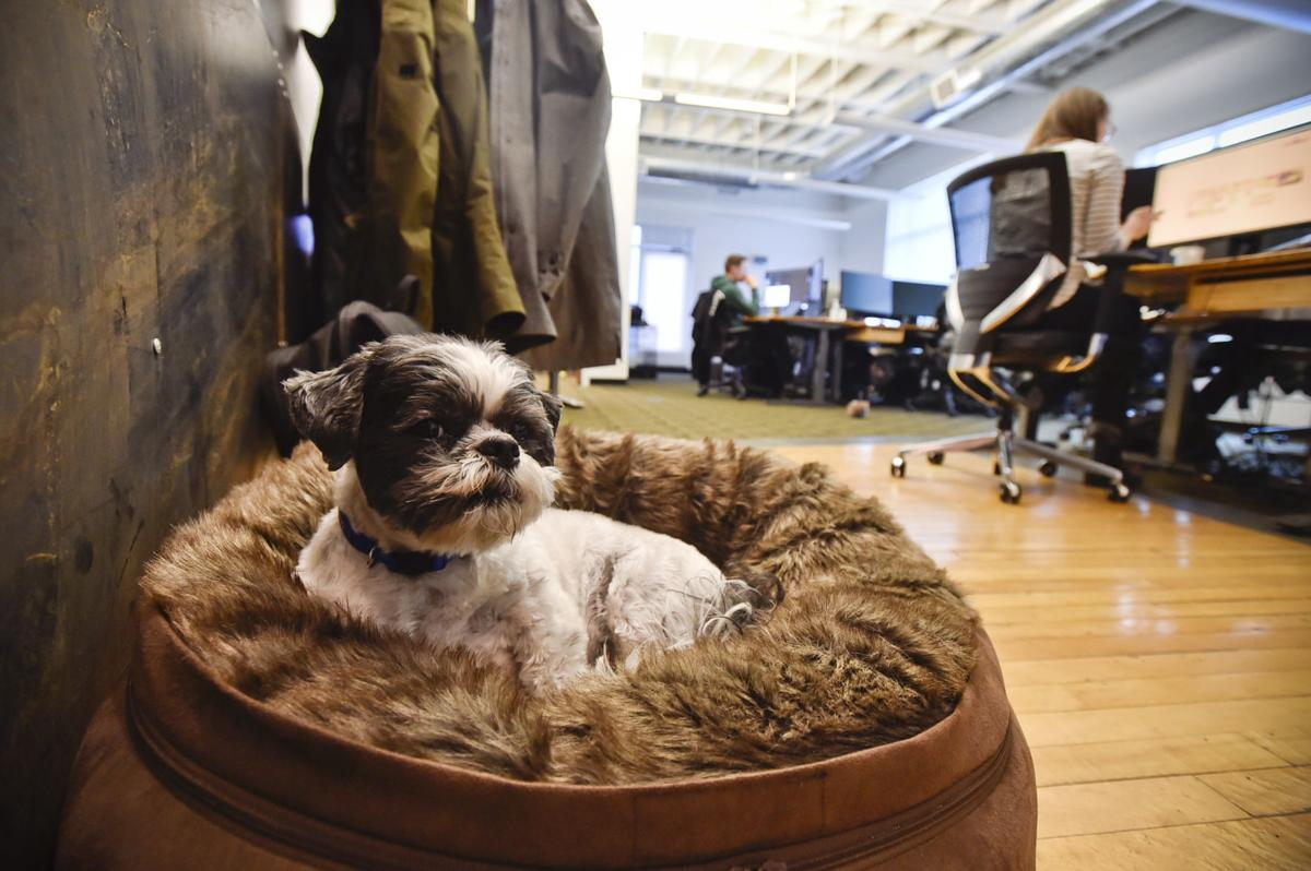 Bosco watches over the offices of Figure Technologies