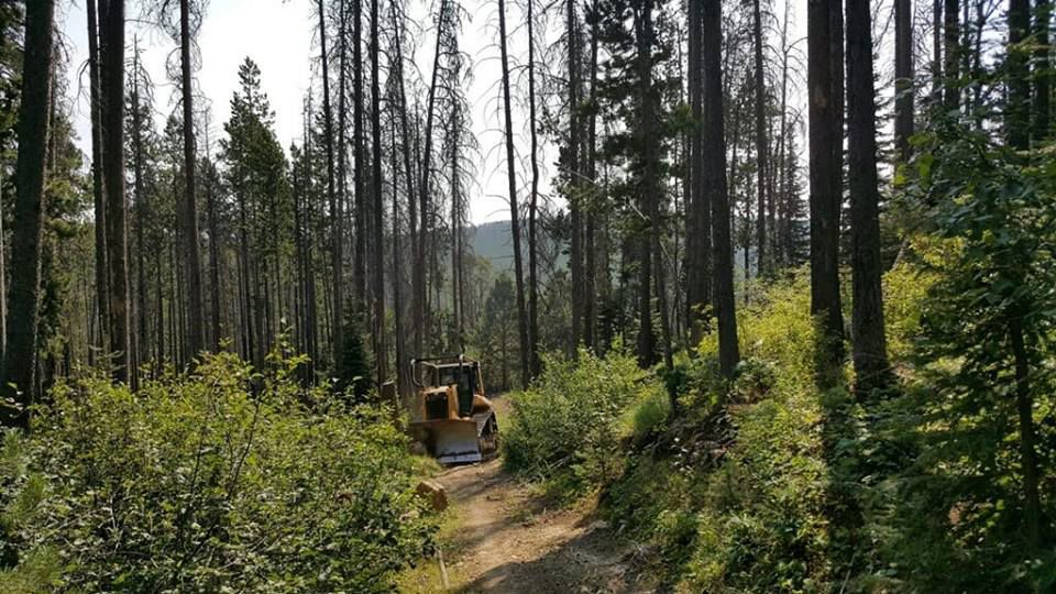 467 Trail Fire dozer