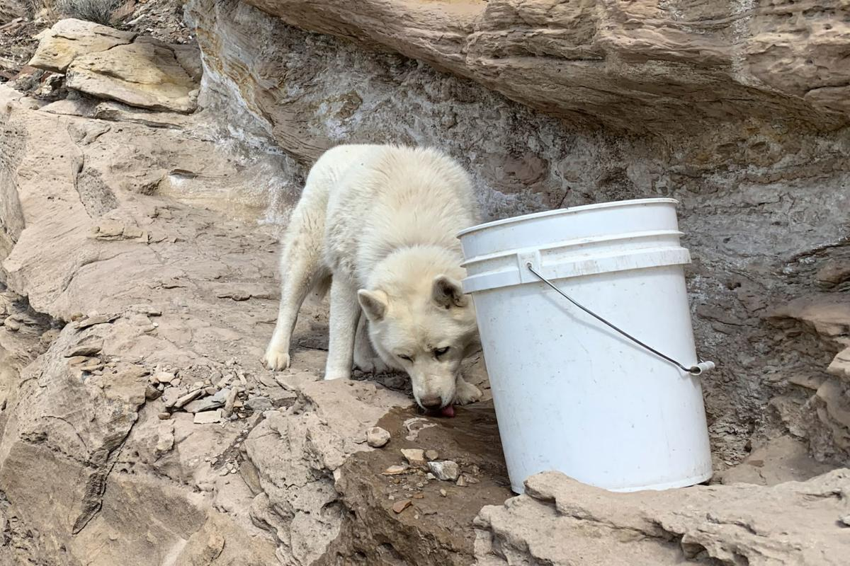 Dog Rescue Water