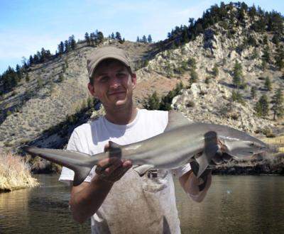 Missouri River Shark