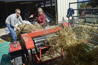 After winning water battle, Helena Valley hemp farmer harvests first crop