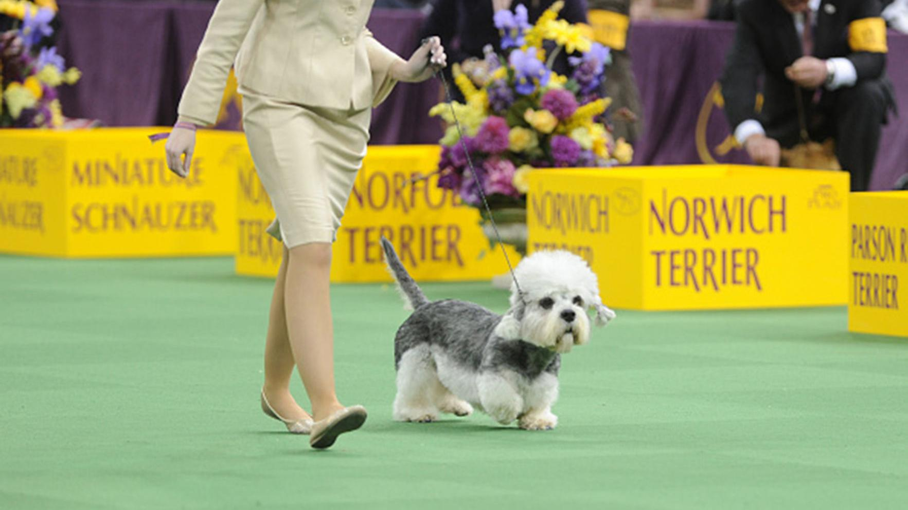 17 wacky breeds to watch at the Westminster Dog Show