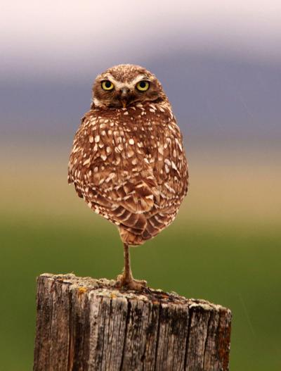 Owl program at Montana Wild