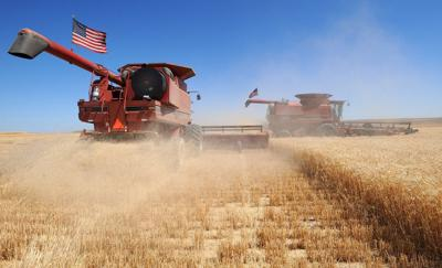 Kevin Downs harvests winter wheat