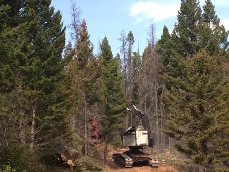 Alice Creek fire feller buncher