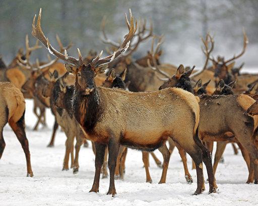 Harsh winter took heavy toll on wildlife across western US (copy)