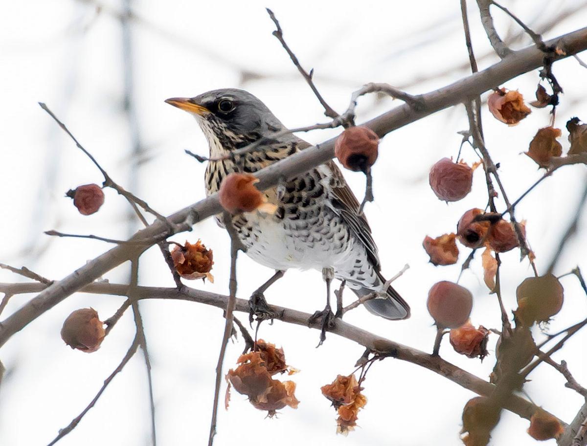 It kind of blows your mind\': Rare bird sighting thrills Montana ...