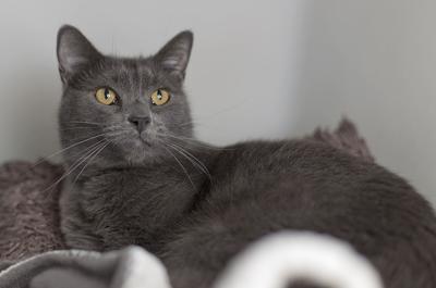 Pet of the week: Milo