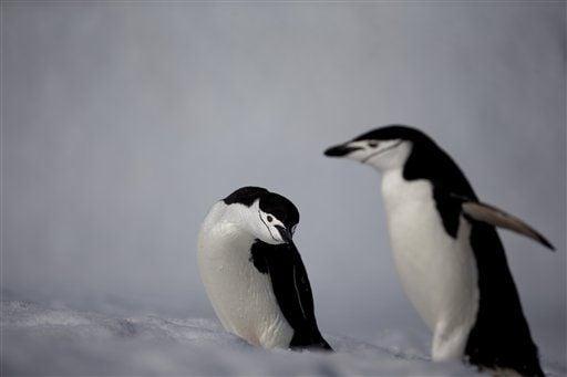 AP PHOTOS: Antarctica's spectacular glaciers melting faster