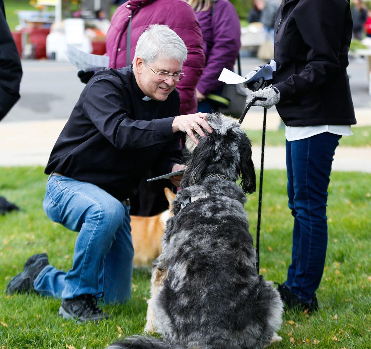 Dog blessing 1