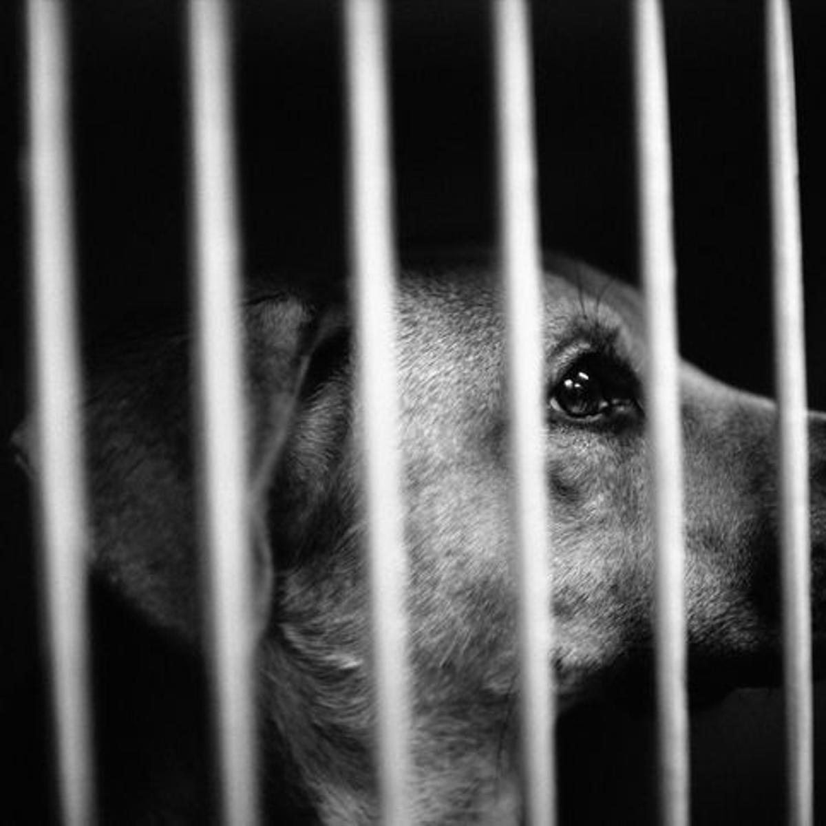 Bill to license pet breeders intended to curtail puppy mills