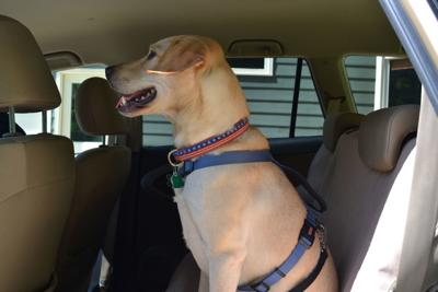 Shopping for a Pet-Friendly Vehicle? Here's What to Look For - Image
