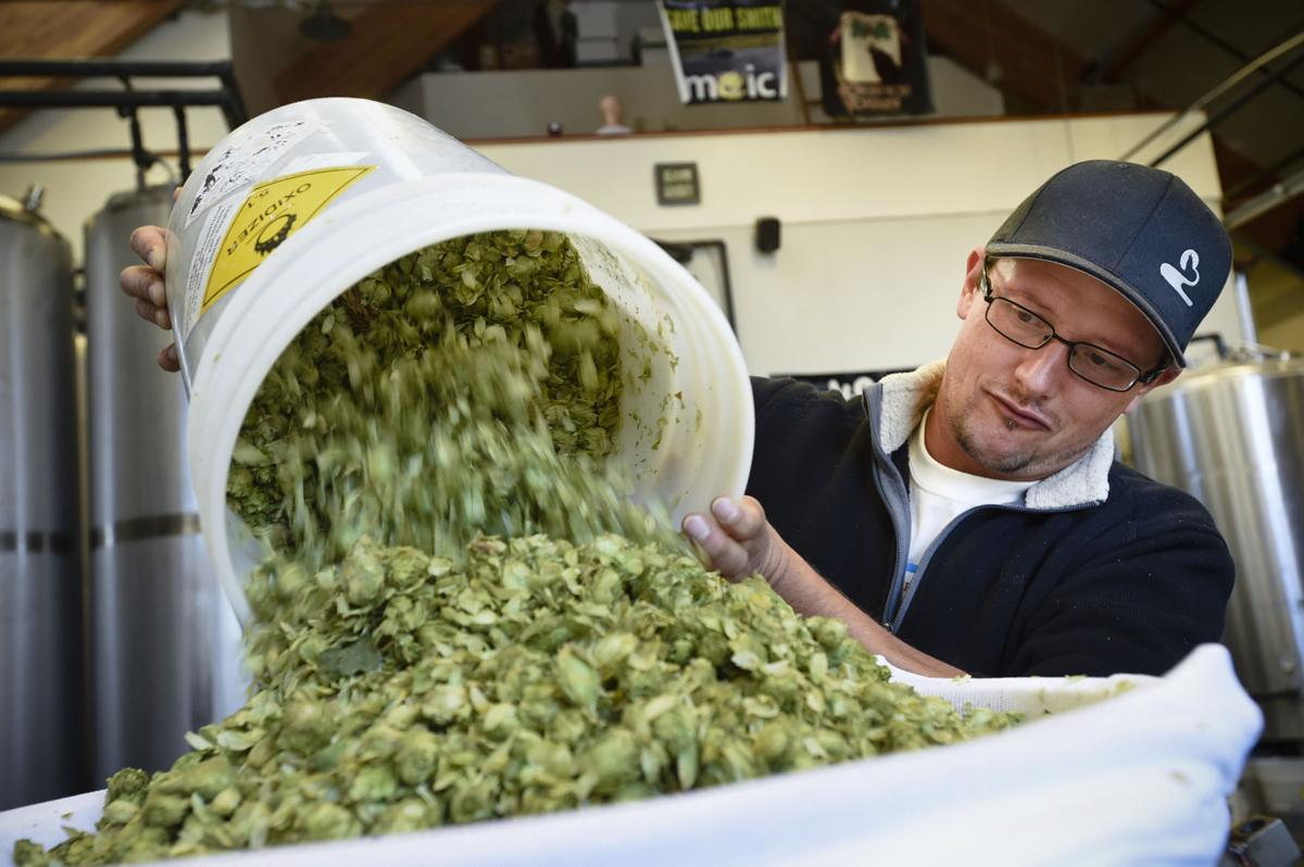 Chris Languein dumps one of a bunch of buckets of hops into a specialized hop infusion barrel Thursday morning during the brew of the Hop Harvest IPA at Blackfoot River Brewing Co.