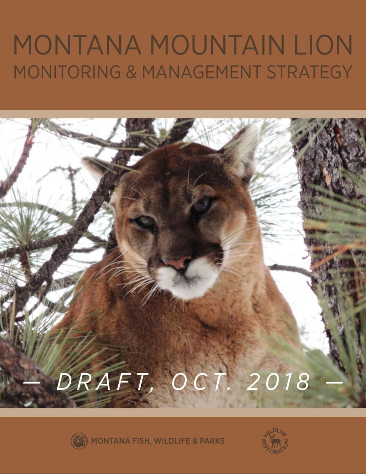 Mountain lion strategy