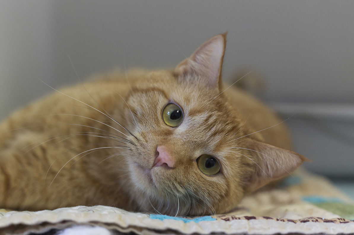 Pet of the week: Ricky Bobby