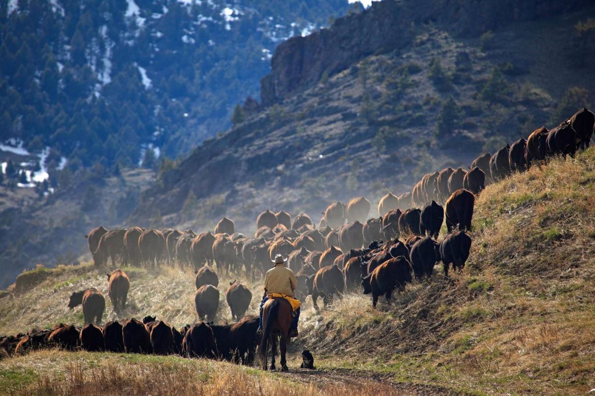 Sieben Livestock