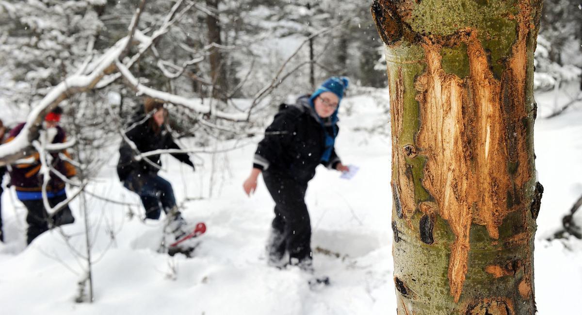 Snowshoeing (copy)