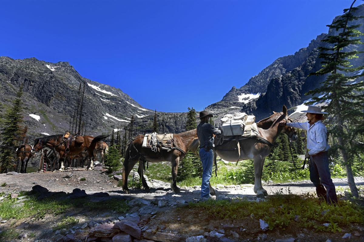 Outfitters and mules at Sperry Chalet (copy)