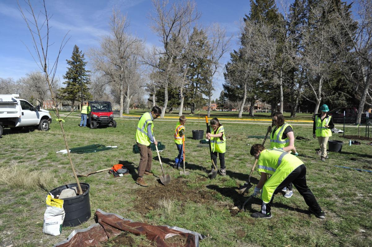 The crew had 19 trees to plant Monday