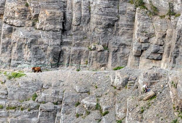 Encounter between grizzly, human in Glacier