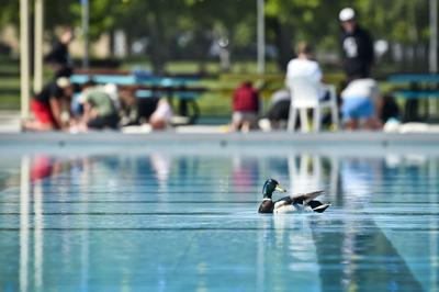 Pool duck