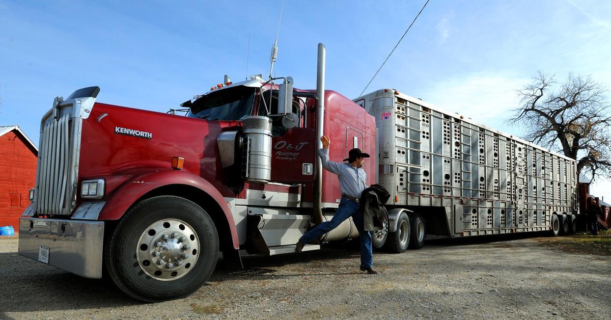Livestock trucker Sy Roark