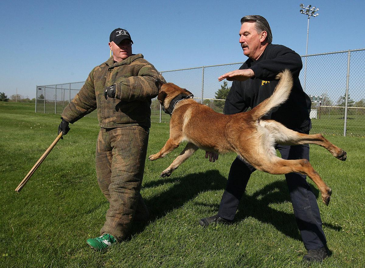 Macon Dog Training