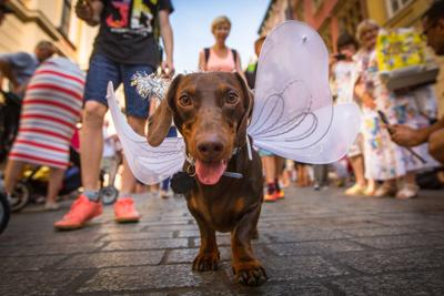 Paws for Cause: Annual Pet-Friendly Events Across the U.S. that Give Back - Image