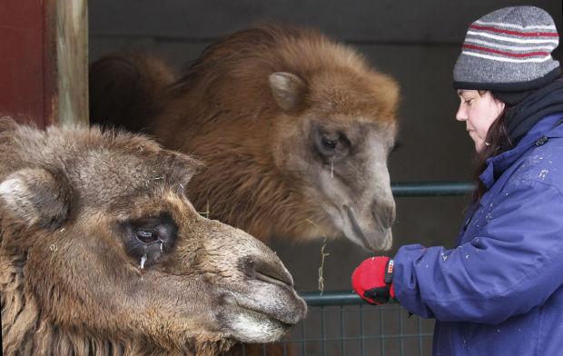 012115-dec-loc-camelspic2