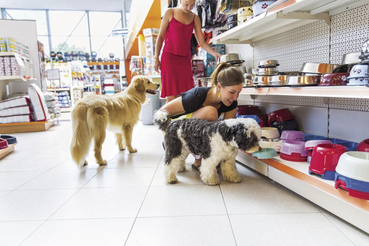 There are rules for shopping with Fido — even in pet