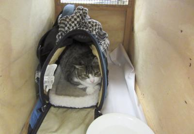 New Zealand Cat Smuggler