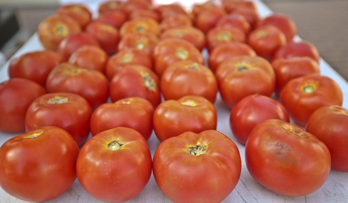 Henhouse_tomatoes 7.06.19.JPG