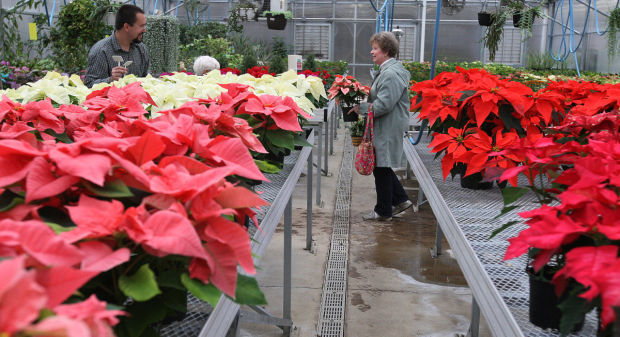 Park District Poinsettia Explosion