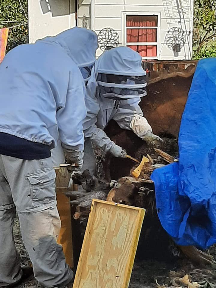 Rescued bees