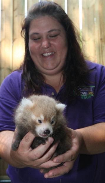 baby red panda ott