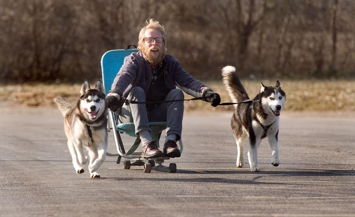'Urban sled dogs' turn heads in Mattoon | State and ...