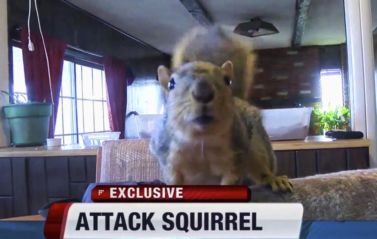 Squirrel Goes Nuts