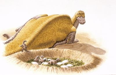 Maiasaura dinosaur eggs