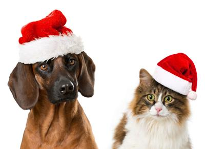 Pets aren\'t the best gifts for Christmas, PETA says | | herald ...