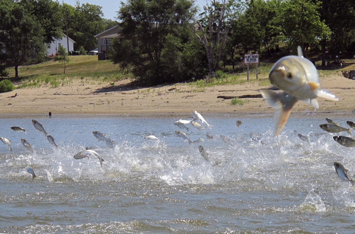 Asian Carp Great Lakes