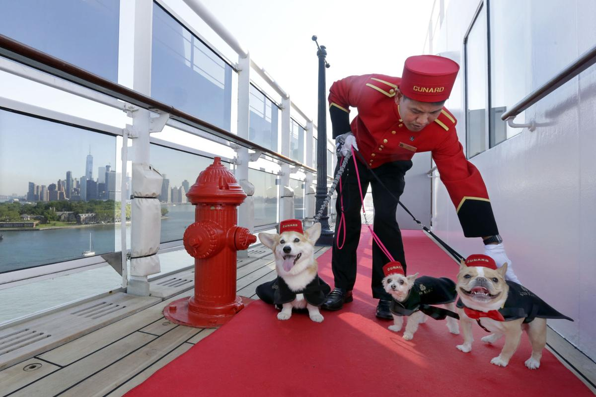 New Digs For Dogs On Queen Mary Cruise Ship Travel Herald - Cruise ships that allow dogs
