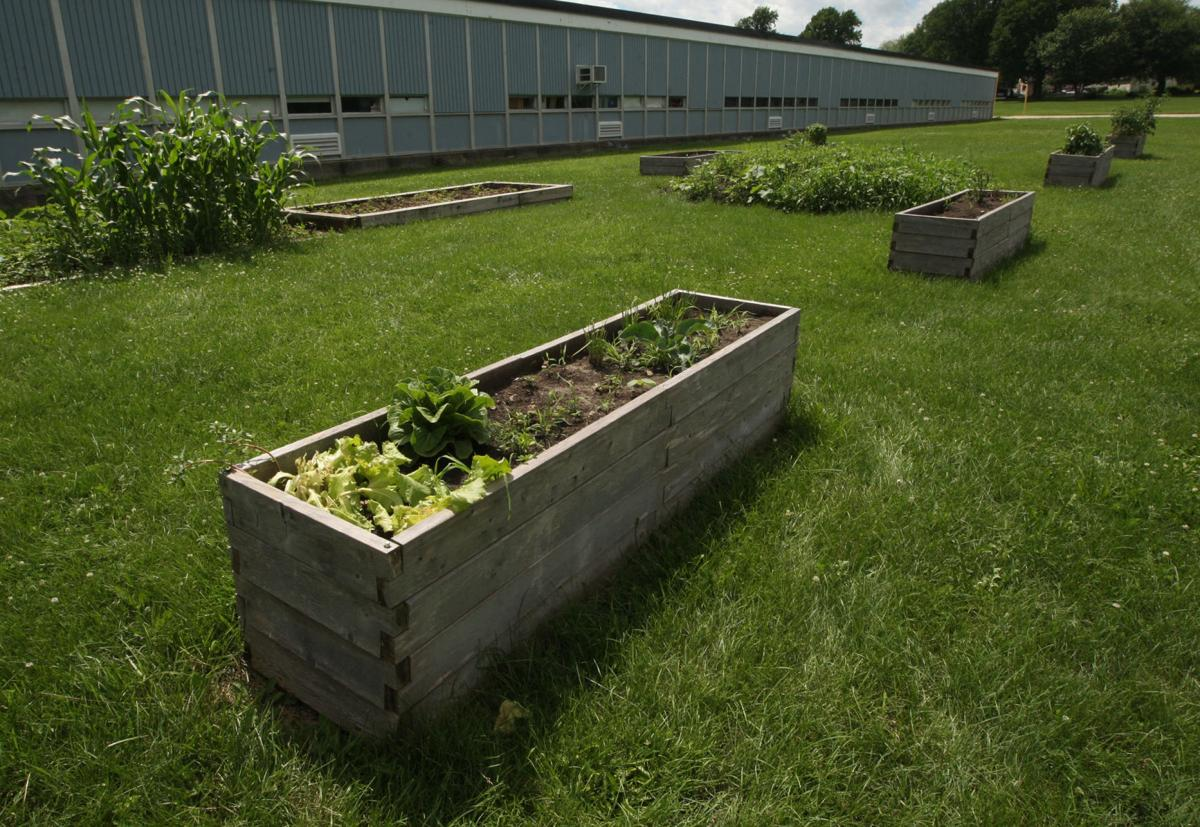 Enterprise School garden boxes 6.29.18