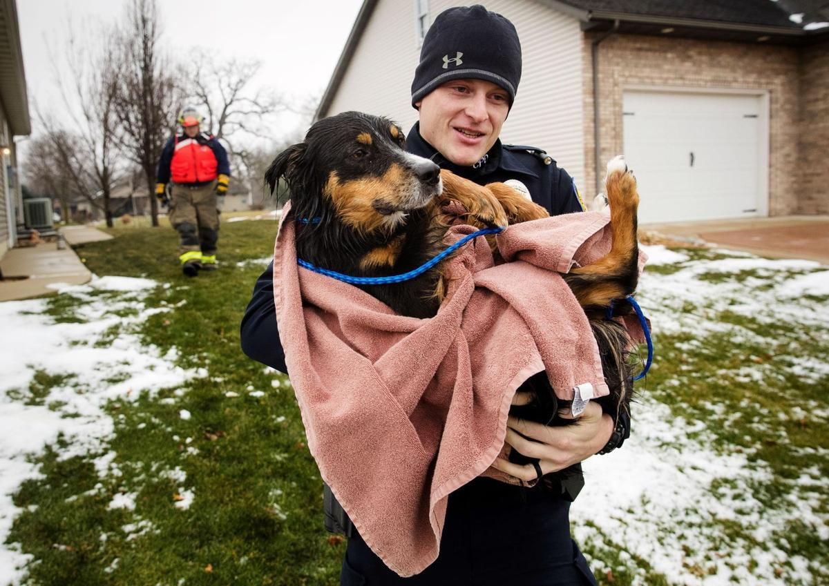 Woman saves dog trapped in freezing Chatham pond | Pets | herald-review.com