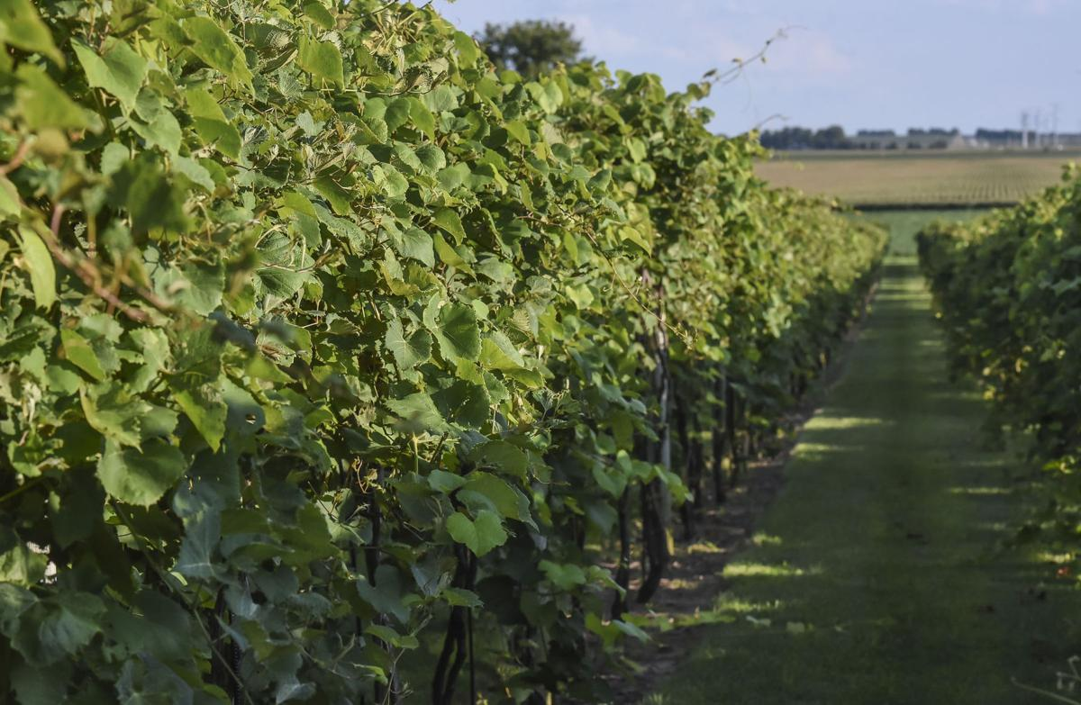 Wineries sprout up in Central Illinois | Local | herald ...