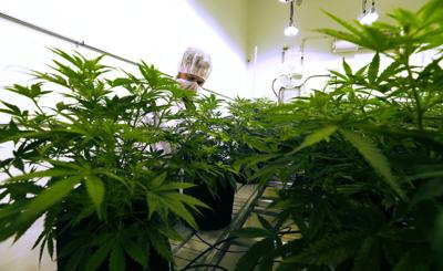 Medical Marijuana Texas