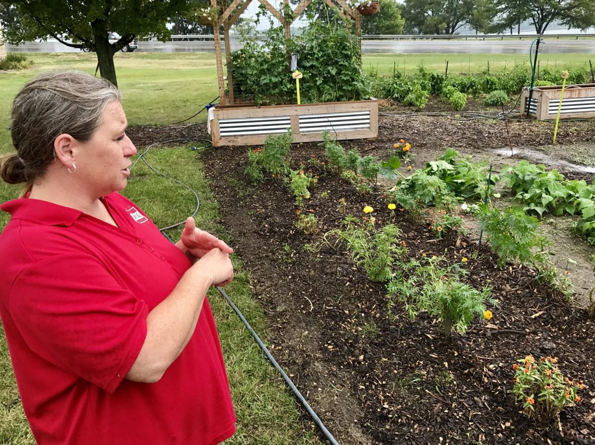 Growing from a garden: Program providing jobs, healthy food for ...