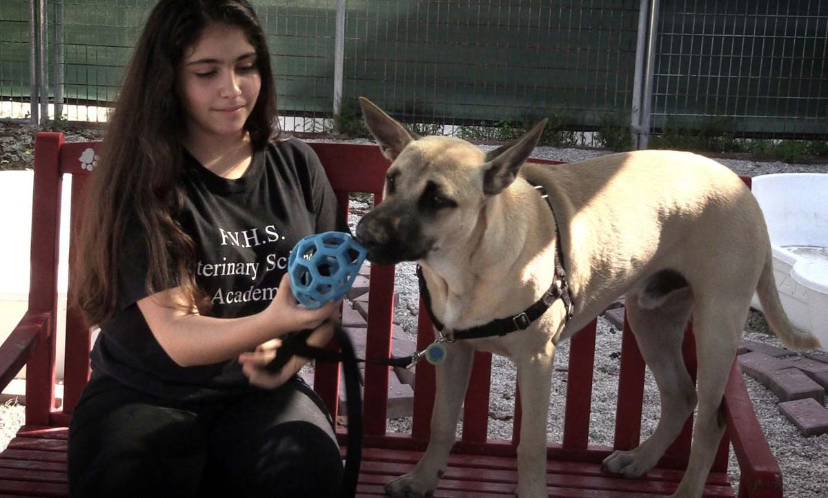 Students train abandoned dogs to help them find new home