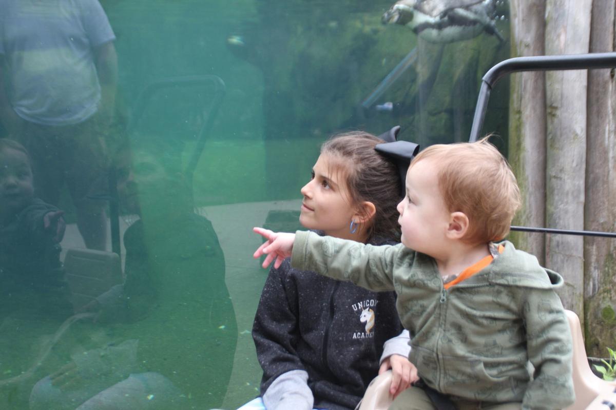 051319-dec-loc-zoo2